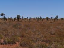 Vegetation der Wüste Stockfoto