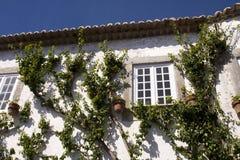 Vegetation in der Wand Stockfotos