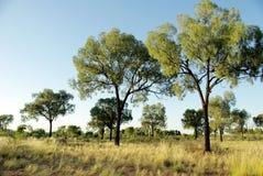 Vegetation in desert - Australia Royalty Free Stock Image