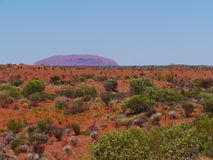 Vegetation of the desert Stock Photo