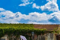 Vegetation, die das Dach übernimmt lizenzfreie stockbilder