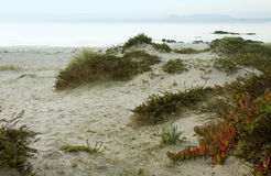 Vegetation on the dune Stock Photo