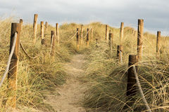 Vegetation in dune Royalty Free Stock Photography