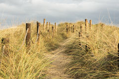 Vegetation in dune Stock Photography
