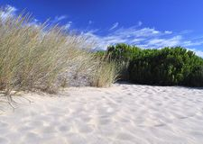 Vegetation on the dunes. Royalty Free Stock Images