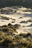 Vegetation on dunes Stock Image