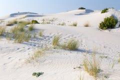 Vegetation dunes Stock Images