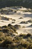 Vegetation on dunes. View of the particular vegetation on the dunes of beaches Royalty Free Stock Image