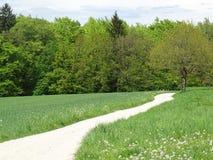 Vegetation, Ecosystem, Grassland, Nature Reserve royalty free stock photos