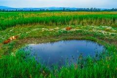 Vegetation, Ecosystem, Grassland, Nature Reserve stock photography