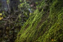 Vegetation, Ecosystem, Moss, Non Vascular Land Plant royalty free stock photos