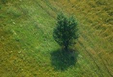 Vegetation, Ecosystem, Nature Reserve, Grassland royalty free stock image