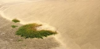Vegetation at the edge of a sandy dune Royalty Free Stock Image