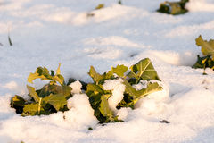 Vegetation emerging from snow Stock Photos