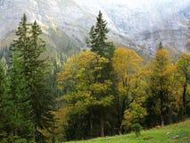 Vegetation för Ahornboden bergdal på nedgången Royaltyfria Foton