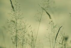 vegetation för detaljfältgräs Arkivfoton
