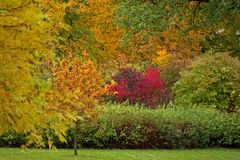 Vegetation in fall Stock Images