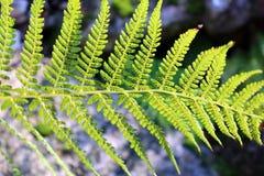 Vegetation, Ferns And Horsetails, Fern, Plant Stock Image