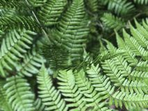 Vegetation, Ferns And Horsetails, Fern, Plant Stock Photos