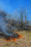 Vegetation fire. On the summer day Stock Photo