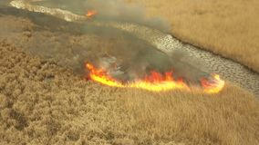 Vegetation fire in the Danube Delta. Aerial view stock footage