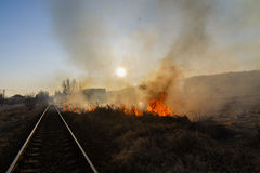 Vegetation fire. Under the hot sun Stock Photos