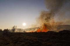 Vegetation fire. Under the hot sun Royalty Free Stock Photos