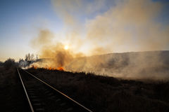Vegetation fire. Under the hot sun Stock Image