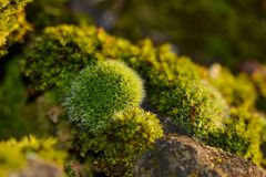 Vegetation, Flora, Plant, Moss Royalty Free Stock Image