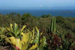 Vegetation in FlorianÃ-³ polis, Brasilien stockbilder