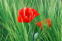 Vegetation, Flower, Field, Wildflower Royalty Free Stock Photography