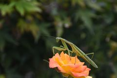 Vegetation, Flower, Flora, Wildflower Royalty Free Stock Photography