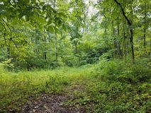 Vegetation in the forest. A lot of green vegetation and trees in clearing in the forest Royalty Free Stock Image