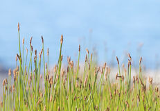 Vegetation in front of defocused sky Royalty Free Stock Images