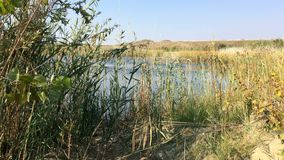 Vegetation In Front Of The Lake