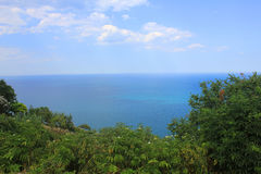 Vegetation in front of the sea. Panorama of vegetation in front of the sea Royalty Free Stock Photos