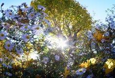 Vegetation in the garden stock photography
