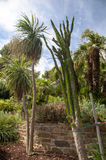 Vegetation on gardens at Bormes les mimosa Royalty Free Stock Image