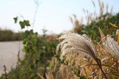 Vegetation, Grass, Plant, Grass Family