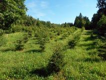 Vegetation, Grassland, Ecosystem, Nature Reserve royalty free stock photos