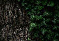 Vegetation, Green, Leaf, Tree Stock Images