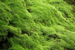 Vegetation, Green, Nature, Ecosystem royalty free stock photography