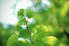 Vegetation royalty free stock photos