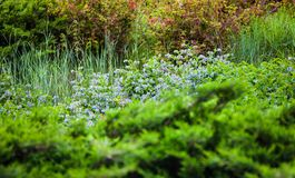 Vegetation in the green spring garden Stock Photos