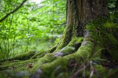 Vegetation, Green, Woodland, Nature royalty free stock images