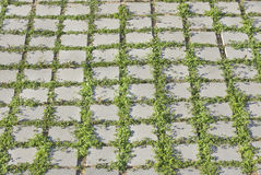 Vegetation grid Royalty Free Stock Image