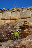 Vegetation growing on Inca Wall. Pisac ruins. Cusco, Peru Stock Photography