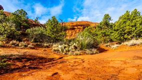 Vegetation growing on the Red Rocks and Red Soil in Coconino National Forest near Sedona. In northern Arizona, USA stock image