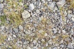 Vegetation growing through rocks Stock Photos