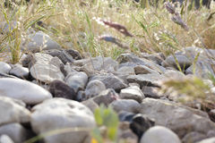 Vegetation growing through rocks from side Royalty Free Stock Photos
